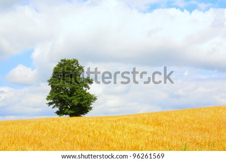 Rural landscape. The agricultural field, the sky and a lonely tree on skyline