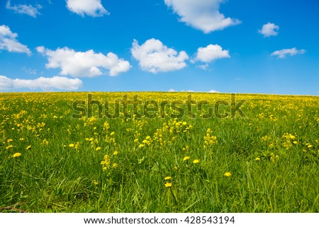 Rural  landscape to the flower meadow and the blue sky. Pastoral panorama of nature summer. Beautiful landscape of a Sunny day. Field with yellow dandelions to the horizon. - stock photo