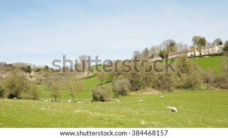Rural Landscape View of Sheep Grazing in a Green Field