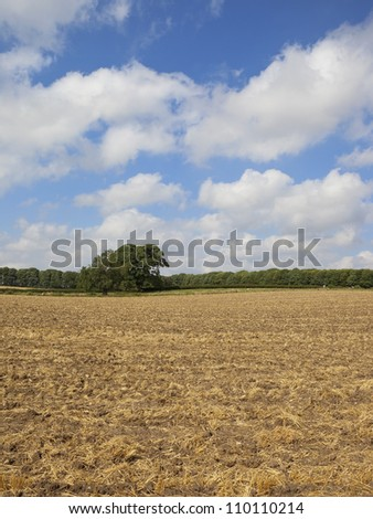 rural landscape with a cultivated stubble field and trees under a cloudy summer sky