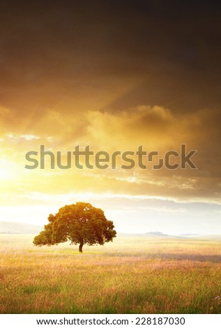 Rural landscape with a single tree in a flowery plain at sunset  - stock photo