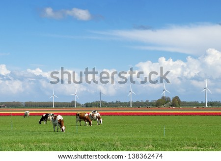 Rural landscape with a tulip field, cows and modern wind turbines in the Netherlands. - stock photo