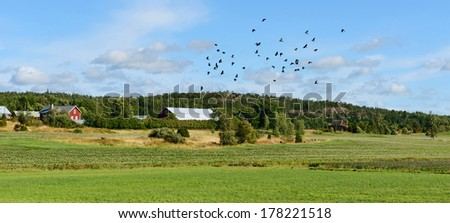 Rural landscape with birds. Potato field and farm buildings - stock photo