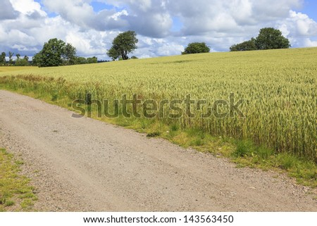 Rural landscape with corn field and a dirt road - stock photo