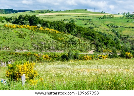 Rural landscape with country road and summer vegetation in France.