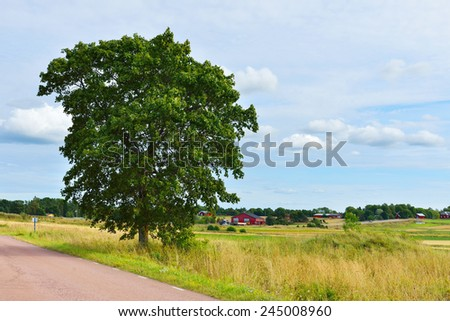 Rural landscape with country road between fields and lone tree - stock photo