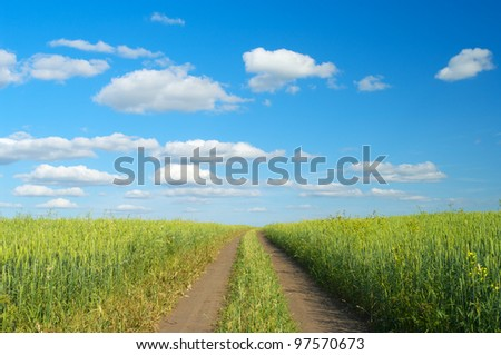 Rural landscape with dirt road between green fields