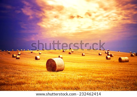 Rural landscape with golden straw bales and dramatic sky - stock photo