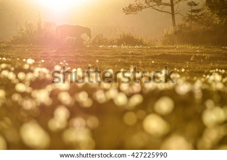 Rural landscape with grazing horses on spring meadow with last light of the day. Meadow is covered by white dandelions. - stock photo
