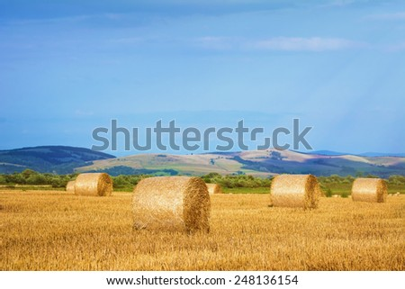 Rural Landscape With Haystacks On The Field - stock photo