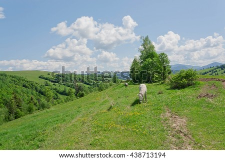 Rural landscape with horses in a pasture in the mountain valley. Landscape with green trees mountain in summer - stock photo