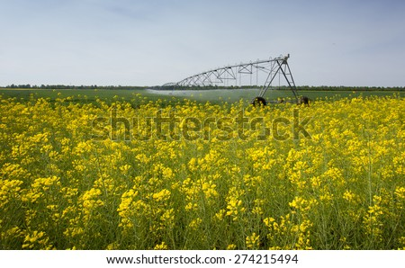 Rural landscape with rapeseed in first plan and irrigation system in wheat field in background - stock photo