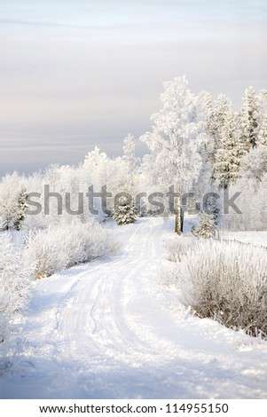 Rural landscape with snowy forest road. - stock photo