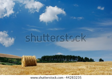 Rural landscape with straw bale and line of dark pine trees in background (selective focus on straw bale)
