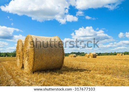 Rural landscape with straw rolls