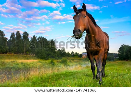 rural landscape with the horse who was grazed on a meadow - stock photo