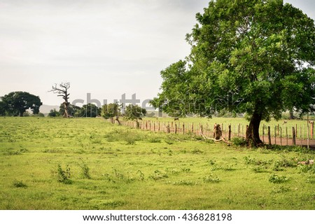 Rural landscape with trees in the village by Puerto Momotombo in the vicinity of Momotombo volcano, Nicaragua - stock photo