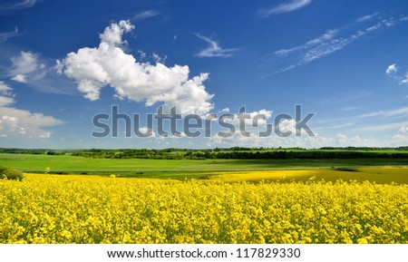 rural landscape. Yellow rapeseed field in Latvia - stock photo