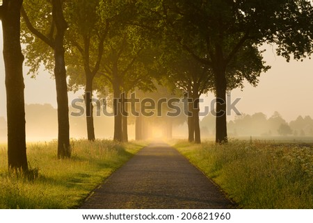 Rural lane with trees at sunrise with mist - stock photo