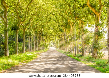 Rural path with trees and light rays - stock photo