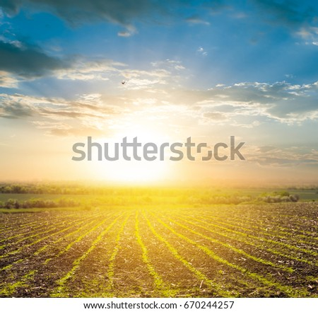 rural plough-land at the sunset