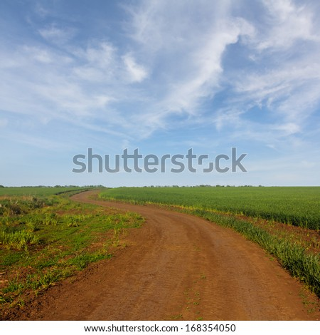 rural road among a fields