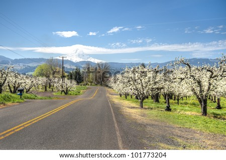Rural road among apple orchards of Hood River Valley - stock photo