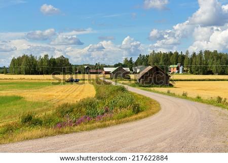 Rural road between fields of rye - stock photo