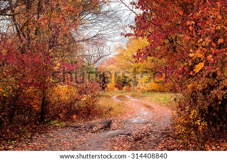 rural road in colorful autumn forest. natural background - stock photo