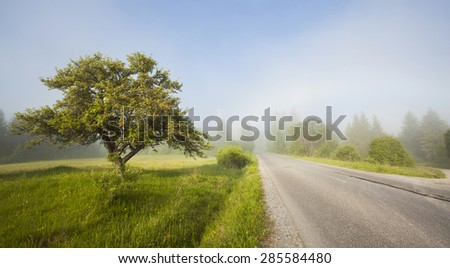 Rural road in morning fog in the summer - stock photo