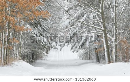 Rural road in Winter, snow covered overhanging branches - stock photo