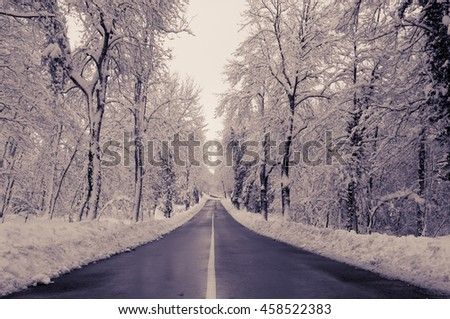 Rural road in winter. Trees covered by the snow and fog