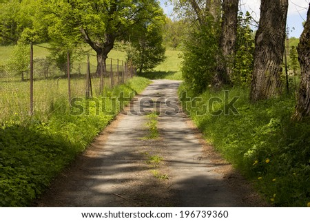 rural road into the forest