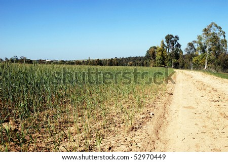Rural road leaving afar near a field with turning green shoots