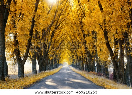 Rural road lined with autumn colored trees