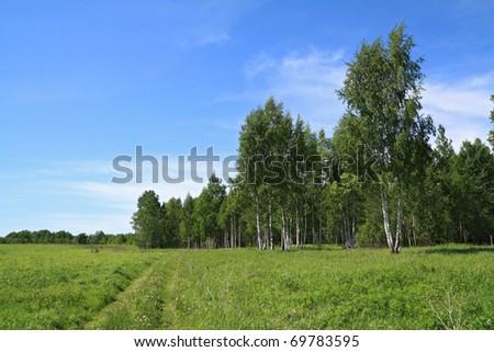 rural road near birch wood - stock photo