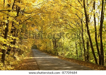 Rural road running along the maple trees in autumn morning. - stock photo