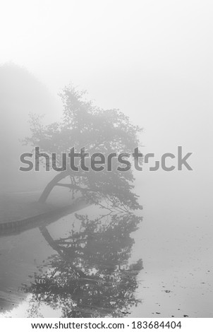 Rural road running through the autumn park on a misty morning. - stock photo