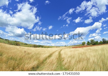 Rural road through a meadow - stock photo