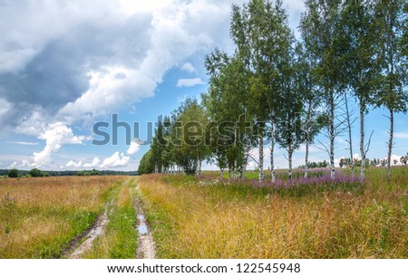 Rural road with birches along summer field - stock photo