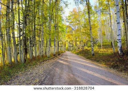 rural road with tall yellow and green aspen during foliage season at Kebler and Ohio Passes in Colorado