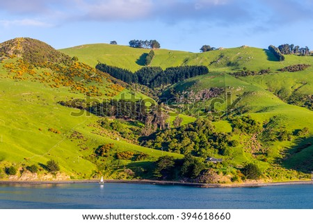 Rural Scene and Sheep Farm near Dunedin at Otago Region Southern island New Zealand - stock photo