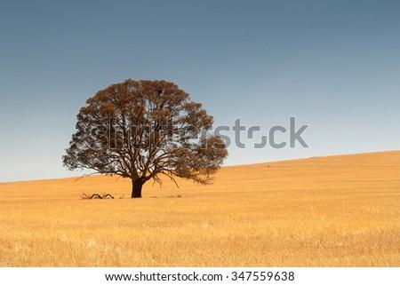 rural scene in South Australia, Australia - stock photo