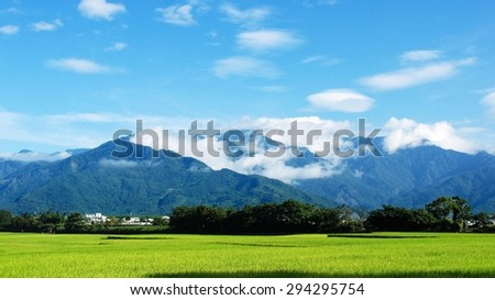 Rural scenery with golden paddy rice farmland in Hualien, Taiwan, Asia. - stock photo