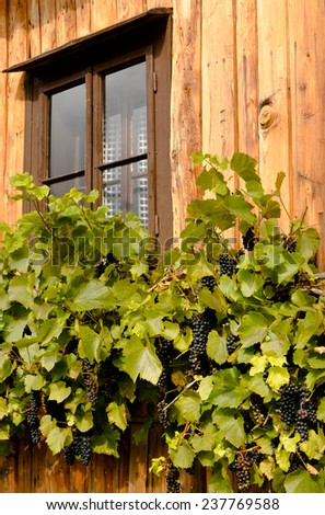 Rural scenery - wooden house wall and grapevine - stock photo