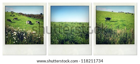 Rural scenes, North Island, New Zealand - stock photo