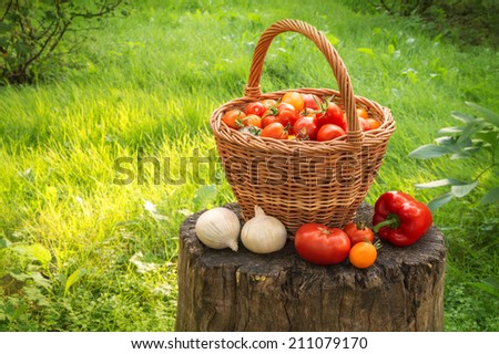 Rural still life. Freshly harvested ripe vivid tomatoes of different varieties in wicker basket, onion and pepper on a stump in  the yard with space for text on backdrop of sunlit lawn. Close-up view - stock photo