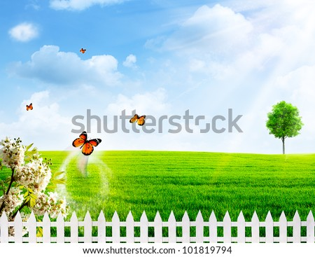 Rural summer abstract backgrounds - stock photo