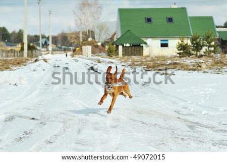 Rural winter landscape and running dog