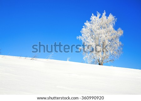 rural winter landscape with a one tree and the blue sky - stock photo